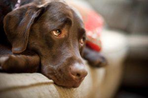 Как лечить собак в домашних условиях